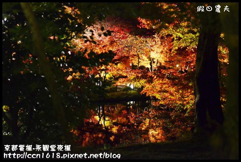 京都賞楓-永觀堂夜楓DSC_3669