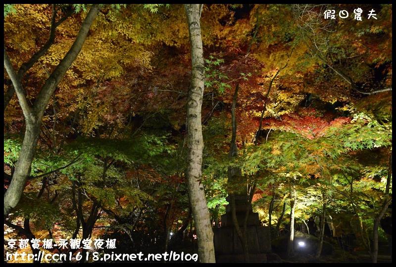 京都賞楓-永觀堂夜楓DSC_3676
