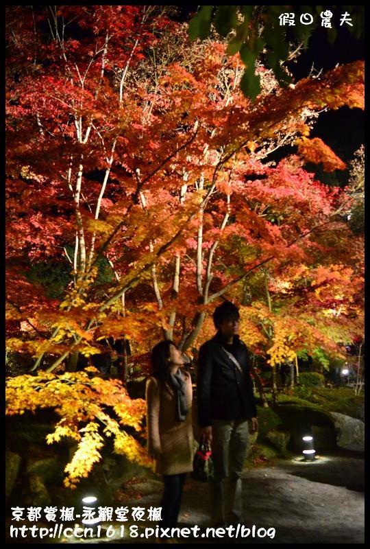 京都賞楓-永觀堂夜楓DSC_3741