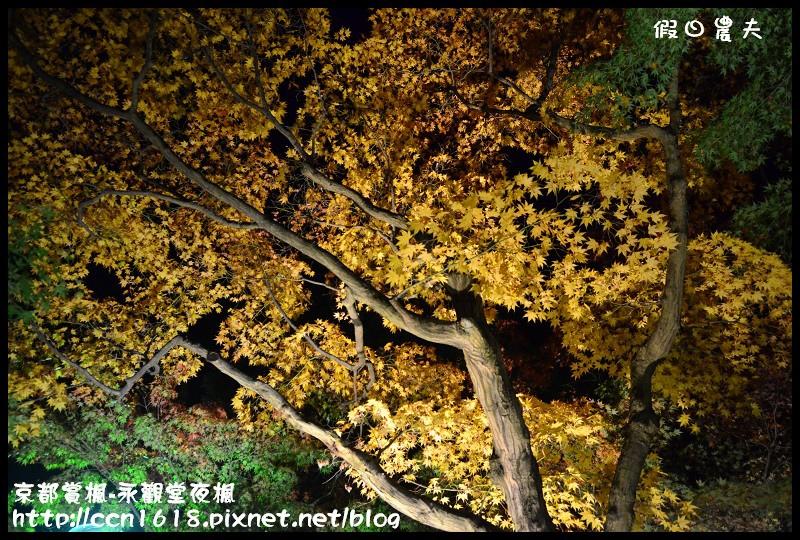 京都賞楓-永觀堂夜楓DSC_3745