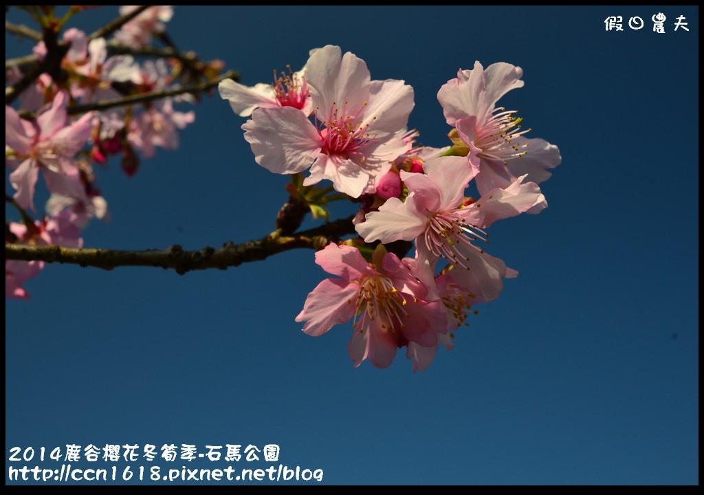 2014鹿谷櫻花冬筍季-石馬公園DSC_1675