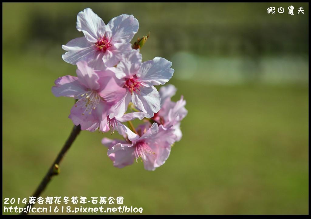 2014鹿谷櫻花冬筍季-石馬公園DSC_1720