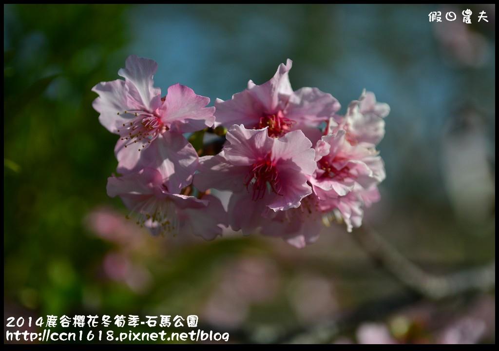 2014鹿谷櫻花冬筍季-石馬公園DSC_1723