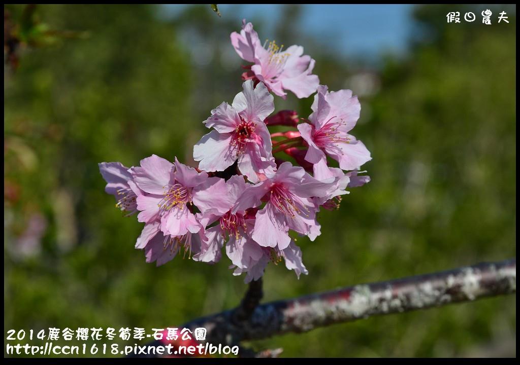 2014鹿谷櫻花冬筍季-石馬公園DSC_1753