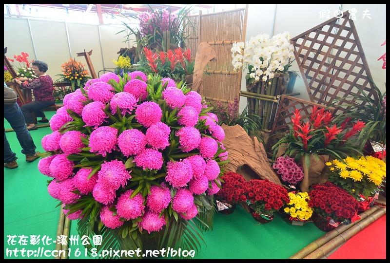 花在彰化-溪州公園DSC_3174