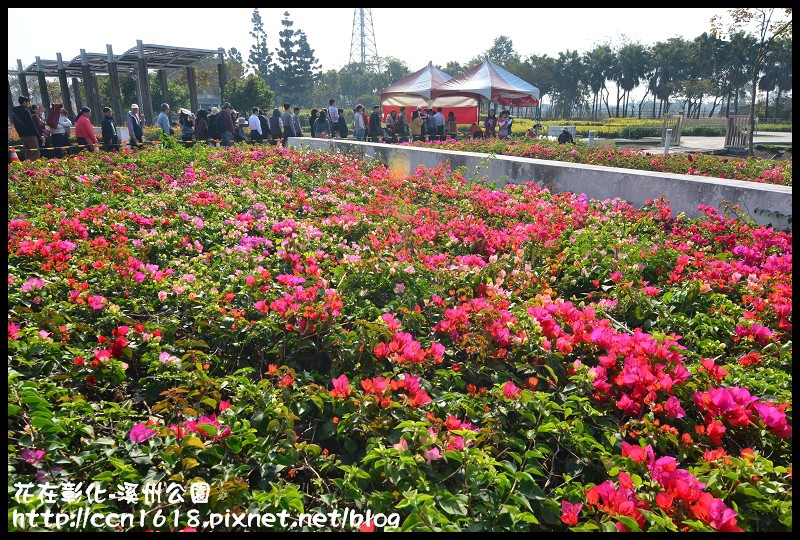 花在彰化-溪州公園DSC_3201