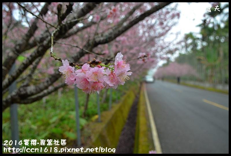 2014賞櫻-鹿篙社區DSC_4401