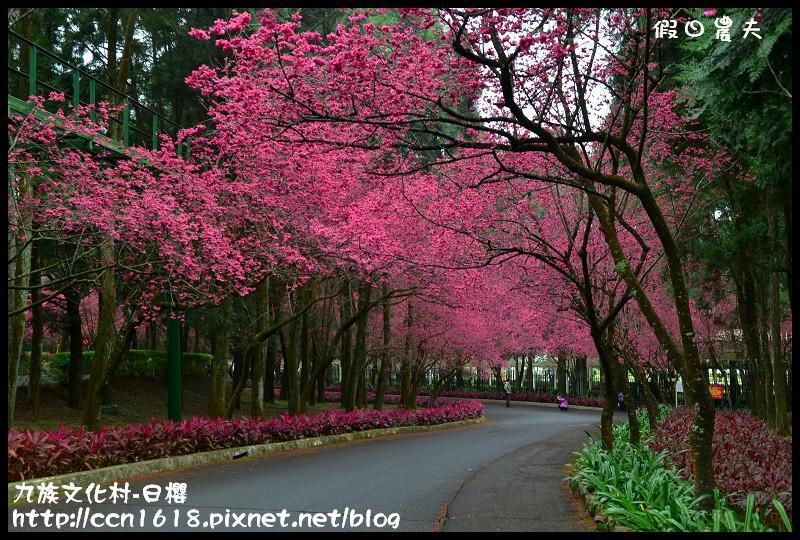 九族文化村-日櫻DSC_4429