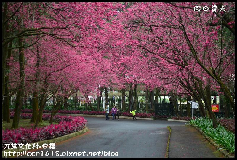 九族文化村-日櫻DSC_4436