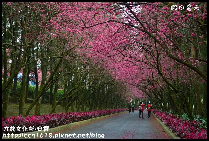 九族文化村-日櫻DSC_4444