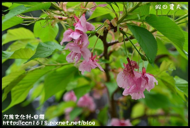 九族文化村-日櫻DSC_4469