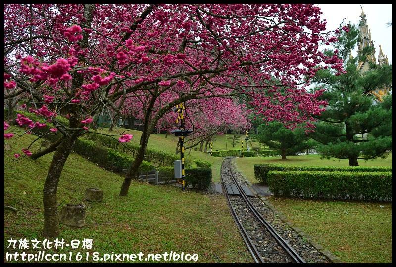 九族文化村-日櫻DSC_4475