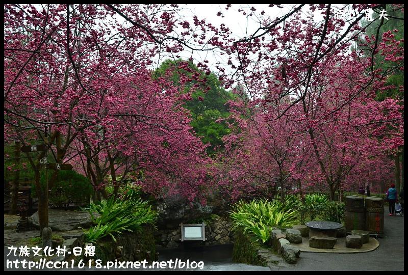 九族文化村-日櫻DSC_4568