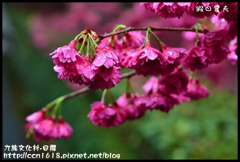 九族文化村-日櫻DSC_4582