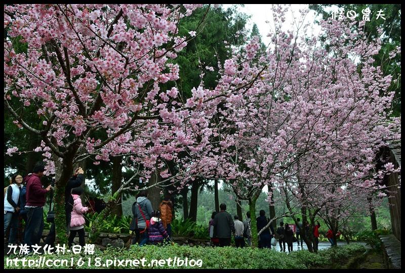 九族文化村-日櫻DSC_4707