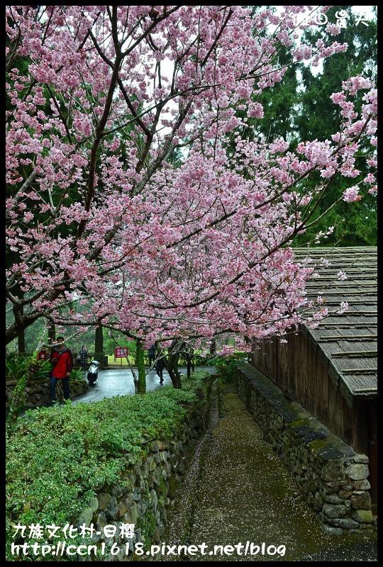 九族文化村-日櫻DSC_4711