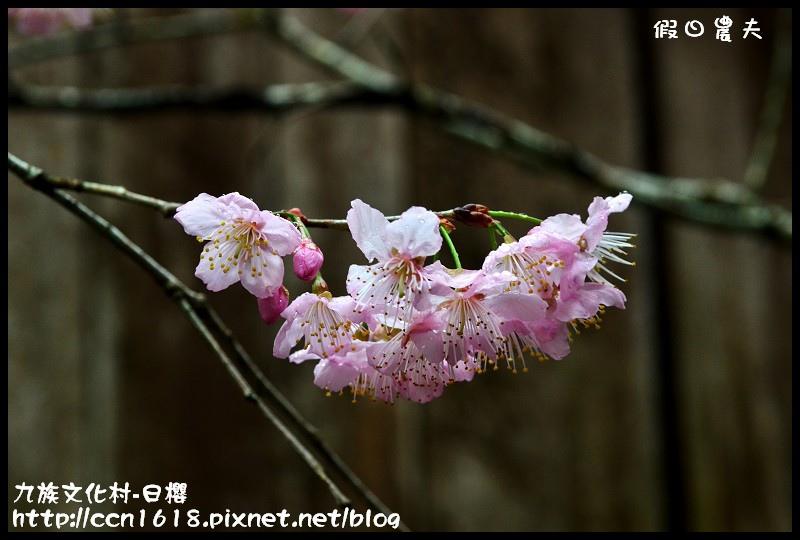 九族文化村-日櫻DSC_4714