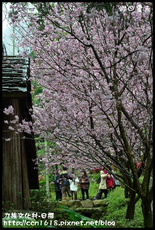 九族文化村-日櫻DSC_4721