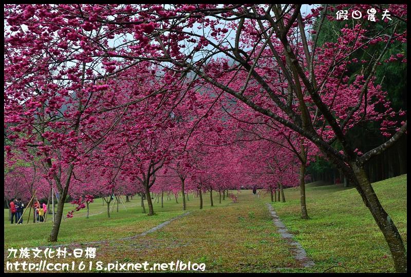 九族文化村-日櫻DSC_4733