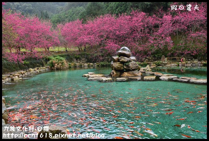 九族文化村-日櫻DSC_4741