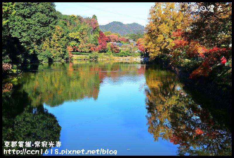 京都賞楓-常寂光寺DSC_4239