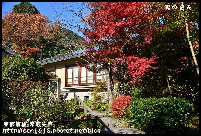 京都賞楓-常寂光寺DSC_4251
