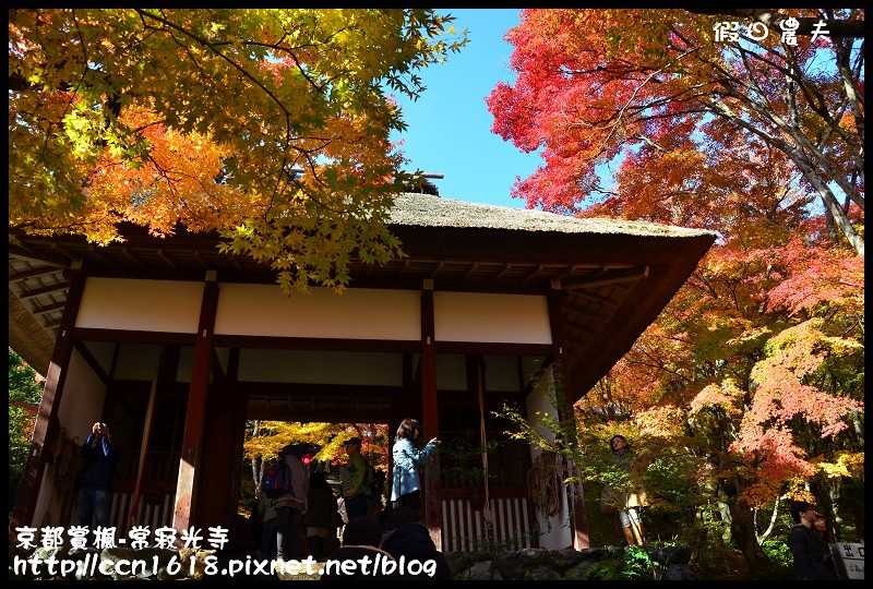 京都賞楓-常寂光寺DSC_4283