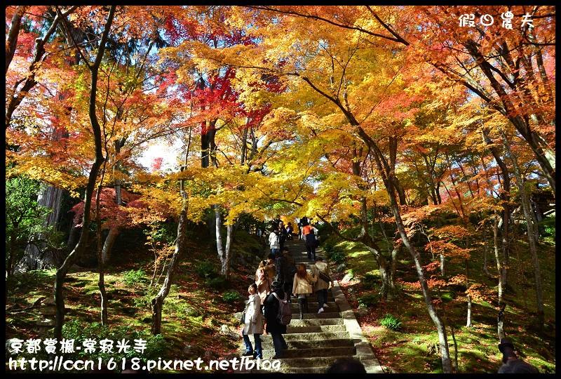 京都賞楓-常寂光寺DSC_4299