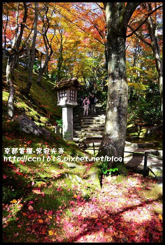 京都賞楓-常寂光寺DSC_4307