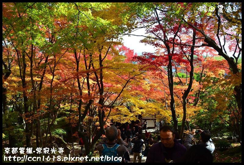 京都賞楓-常寂光寺DSC_4318