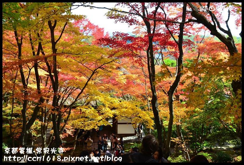 京都賞楓-常寂光寺DSC_4321