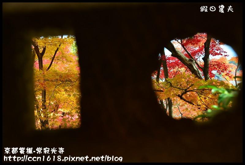 京都賞楓-常寂光寺DSC_4345