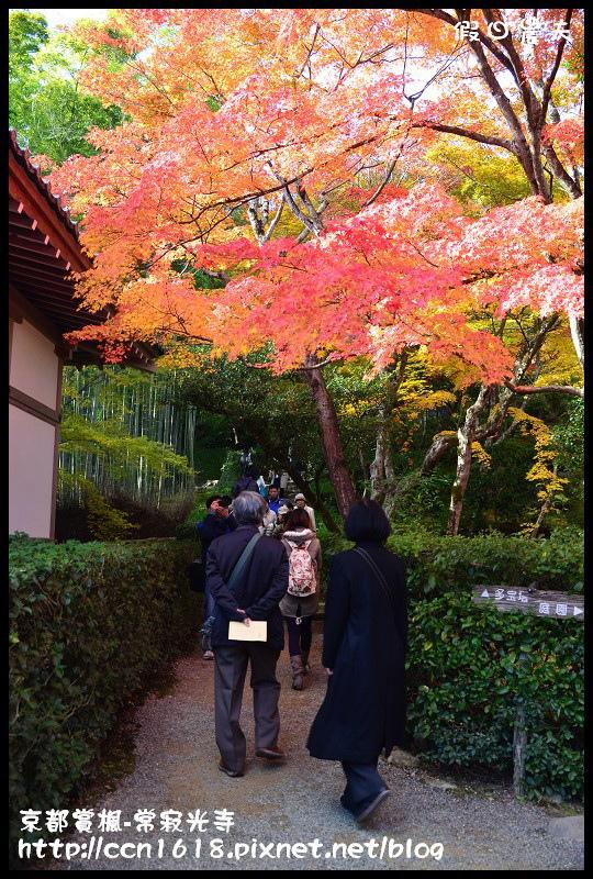 京都賞楓-常寂光寺DSC_4368