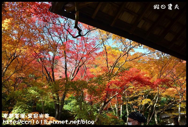 京都賞楓-常寂光寺DSC_4371