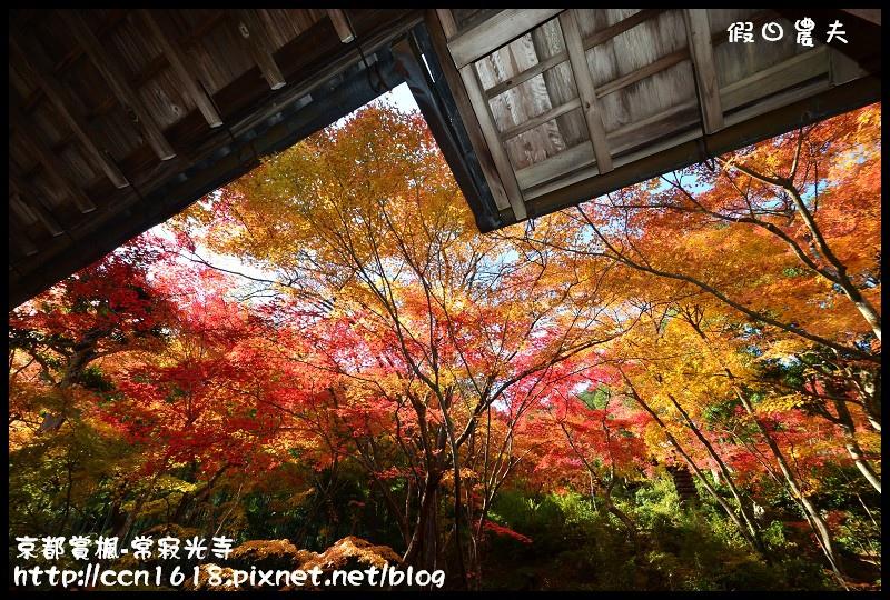 京都賞楓-常寂光寺DSC_4383