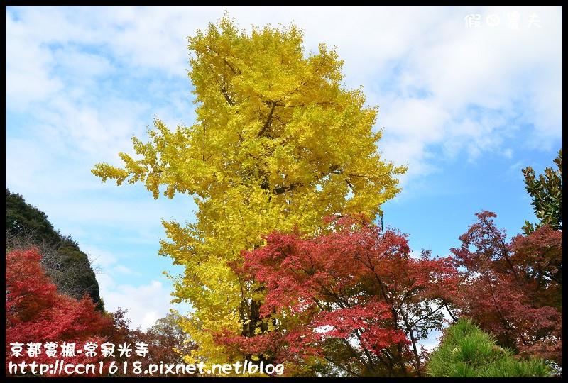 京都賞楓-常寂光寺DSC_4446