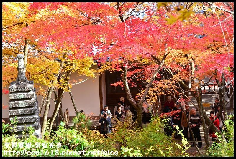 京都賞楓-常寂光寺DSC_4429