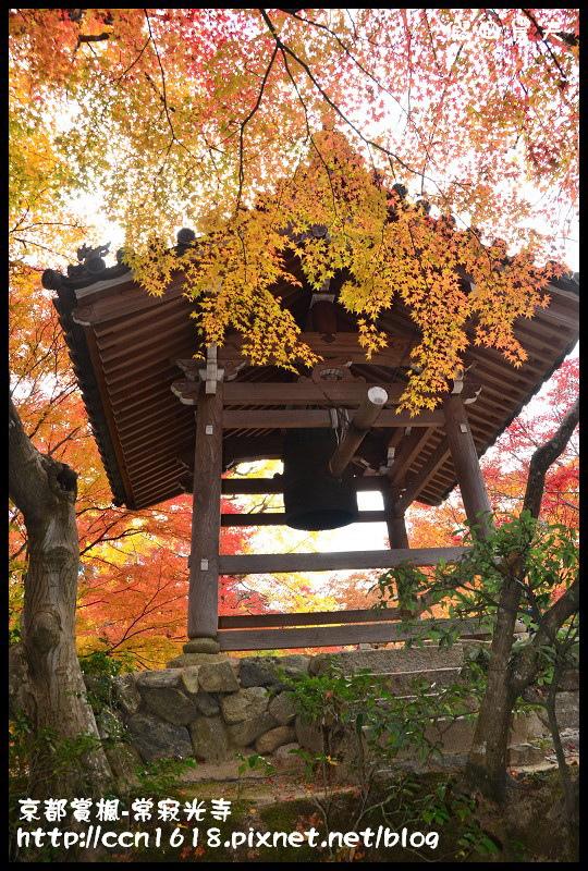 京都賞楓-常寂光寺DSC_4464