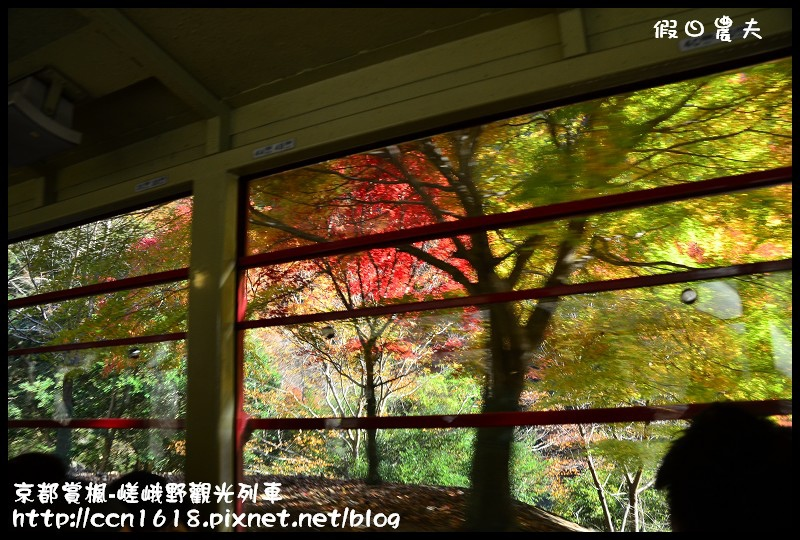 京都賞楓-嵯峨野觀光列車DSC_3864