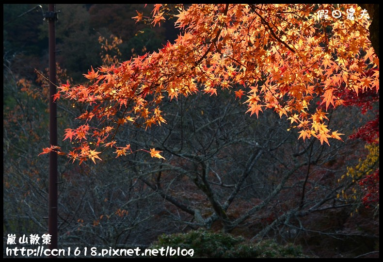 嵐山散策DSC_4627
