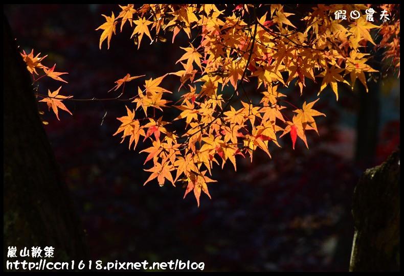 嵐山散策DSC_4628