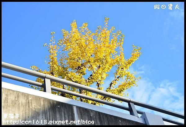 東福寺DSC_4981