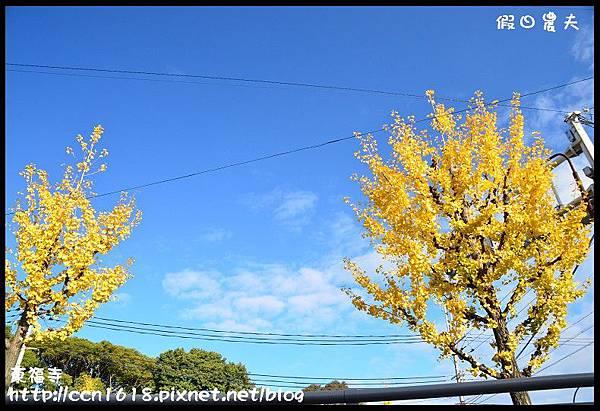 東福寺DSC_4983