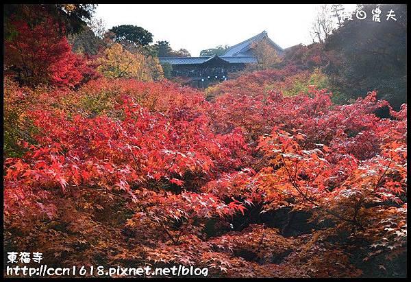 東福寺DSC_5018