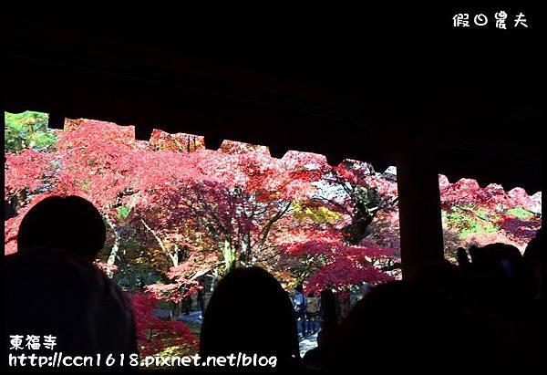 東福寺DSC_5044