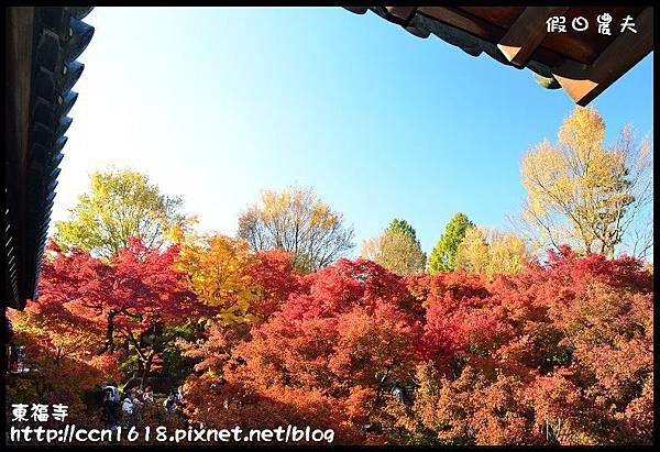 東福寺DSC_5090