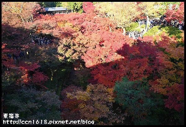 東福寺DSC_5098
