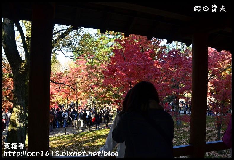 東福寺DSC_5153