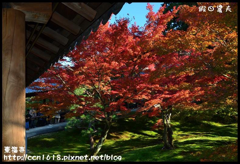 東福寺DSC_5157