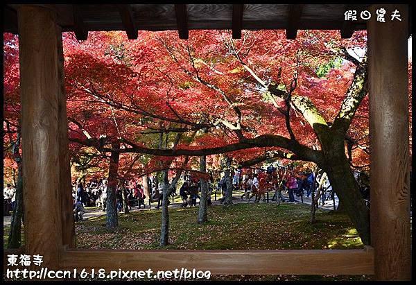 東福寺DSC_5178